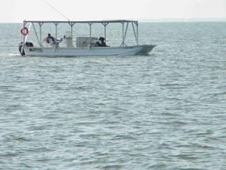 Метастазы Мексиканского залива 4