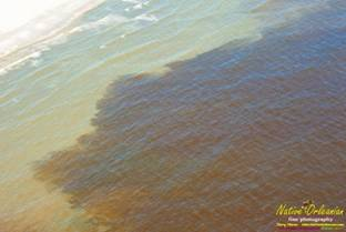 Метастазы Мексиканского залива 7